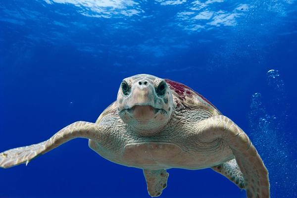 Turtles on Fripp Island
